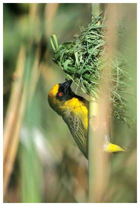 animals-bird.jpg