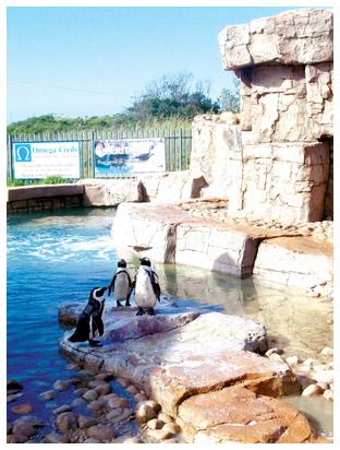 samrec-penguin-pool.jpg